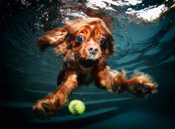 Hunde unter Wasser - Literaturboot - Reisen & Bildbände