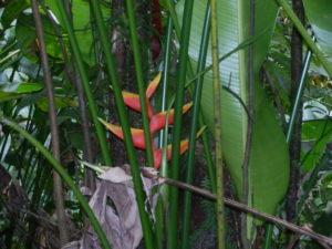 Blume im Regenwald