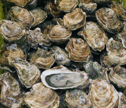 Austern: Die Medizin für gestrandete See-Leute - Literaturboot - Blog